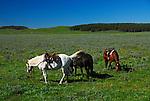 Horses and Horse Close-Ups