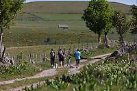 Europe/France/Midi-Pyrénées/12/Aveyron/Aubrac/Env de Laguiole: Randonnée en sous le Puech du Suquet [Autorisation : 2011-120] [Autorisation : 2011-121]