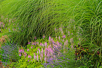 Summer Garden, Washington