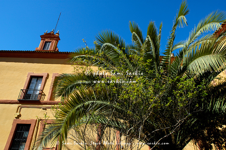 Palm tree and exterior view of building in the Alcazar of Seville, Andalusia, Spain.