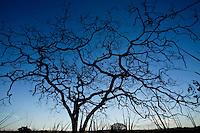 Patos de Minas_MG, Brasil...Plantacao de cana-de-acucar em Patos de Minas, Minas Gerais...The sugar cane agriculture in Patos de Minas, Minas Gerais...Foto: LEO DRUMOND / NITRO..