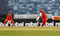 1st November 2019; Western Australia Cricket Association Ground, Perth, Western Australia, Australia; Womens Big Bash League Cricket, Perth Scorchers versus Melbourne Renegades; Danielle Wyatt of the Melbourne Renegades plays a cover drive during her innings