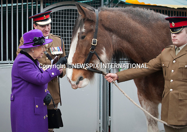 """THE QUEEN .strokes drum horse Churchill a drum horse during her visit to  Combermere Barracks in Windsor, Berkshire_26/11/2012.Mandatory Credit Photo: ©A Harlen/NEWSPIX INTERNATIONAL..**ALL FEES PAYABLE TO: """"NEWSPIX INTERNATIONAL""""**..IMMEDIATE CONFIRMATION OF USAGE REQUIRED:.Newspix International, 31 Chinnery Hill, Bishop's Stortford, ENGLAND CM23 3PS.Tel:+441279 324672  ; Fax: +441279656877.Mobile:  07775681153.e-mail: info@newspixinternational.co.uk"""