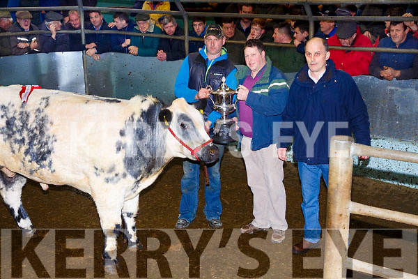 This Belgian Blue was awarded the Supreme Champion Bullock at the Tralee Mart cattle fat stock show and sale on Monday, Lot 250 Weighing 665Kg, Born March 2016 and sold for €1,950. Pictured l-r; Niel Blennerhassett(Breeder), Ronan Barron & Mark Collins(Buyer Slaney Foods).