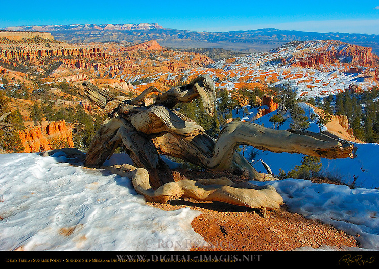 Dead Tree at Sunrise Point in Winter, Bryce Canyon National Park, Utah