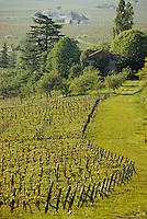 Europe/France/Aquitaine/24/Dordogne/Vallée de la Dordogne/Route des vins de Bergerac/Monbazillac: Le vignoble de Monbazillac