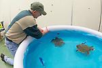 Green Turtles In Pool Warming Up