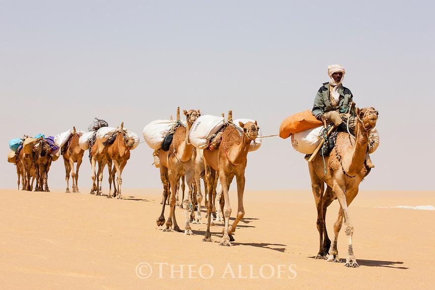 Chad (Tchad), North Africa, Sahara, Borkou District, camel caravan in desert transporting salt