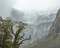 Beech tree of native rainforest with Darran Mountains after fresh snowfall and waterfall, Fiordland National Park, UNESCO World Heritage Area, Southland, New Zealand, NZ