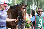 July 12, 2014: Delaware Handicap contender Molly Morgan in the paddock before the race. Belle Gallantey, Jose Ortiz up, wins the Grade I Delaware Handicap at Delaware Park in Stanton Delaware. Trainer is Rudy Rodriguez; Owners are Michael Dubb, Bethlehem Stabes LLC and Gary Aisquith ©Joan Fairman Kanes/ESW/CSM