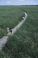 Tourists on Boardwalk in Point Pelee National Park