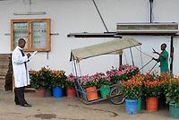 TANSANIA, Anbau von fair trade Schnittblumen Rosen in Gewaechshaus fuer Export nach Europa bei Firma Kiliflora nahe Arusha, Frachtabteilung - TANZANIA Arusha, rose flower cultivation in green house at fair trade company Kiliflora for export to Europe, shipping deapartment