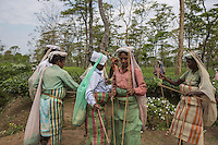 India – West Bengal: Tea pluckers having a rare break at Mogulkata Tea Estate, in the Dooars region. Tea plucking is a task generally reserved to women because of their better accuracy and precision. Pluckers earn 122.50 rupees (1.93 USD) per day and are generally required to collect up to 25 kgs of tea leaves daily.