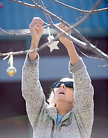 NWA Democrat-Gazette/FLIP PUTTHOFF <br />STAR LIGHT, STAR BRIGHT<br />Virginia Hiett of Rogers places Christmas decorations on trees Saturday Nov. 30 2019 at the Rogers Public Library. Hiett decorated two red maple trees on the north side of the library.