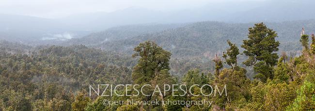 Beech trees above native forest of Oparara Basin near Karamea, Kahurangi National Park, Buller Region, New Zealand, NZ