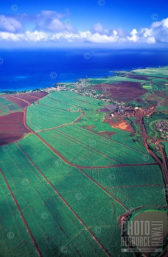 Aerial view of the sugar cane fields of Maui