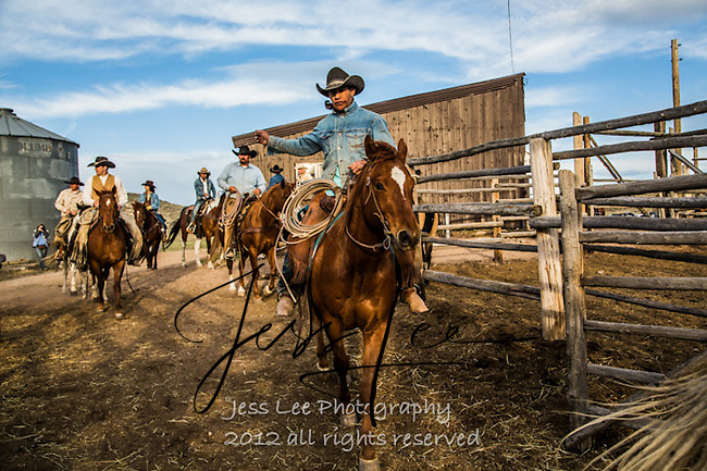 moving them out Cowboys working and playing. Cowboy Cowboy Photo Cowboy, Cowboy and Cowgirl photographs of western ranches working with horses and cattle by western cowboy photographer Jess Lee. Photographing ranches big and small in Wyoming,Montana,Idaho,Oregon,Colorado,Nevada,Arizona,Utah,New Mexico.