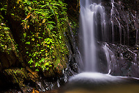 Cucharillos Waterfall in the Choco Rainforest, Ecuador. This area of jungle is the Mashpi Cloud Forest in the Pichincha Province of Ecuador, South America