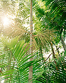 Brazil, Belem, South America, a detail of palms in the Amazon Rainforest