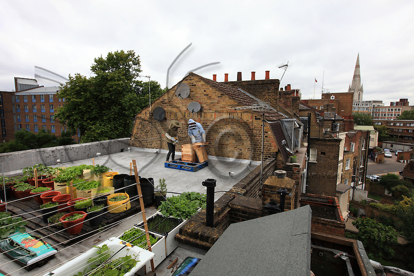 """On the roof of the tavern The 3 Stags in Lambeth, Dr Luke Dixon is practicing his summer activity: urban beekeeping. """"London is the ideal place for honey because of the great variety of flowers and parks and its mild climate."""" He told the BBC, """"There are hives at Lambeth Palace in Regents Park, and even the queen has had hives at Buckingham Palace"""". Dr Luke Dixon is an expert in urban beekeeping. """"Apiculture in the city is not new. People have been keeping hives on London's rooftops for decades. Robin Leigh-Pemberton, a governor of the Bank of England, has kept hives on the roof of the bank on Threadneedle Street and others have discreetly done the same thing on buildings and offices out of the public gaze."""""""