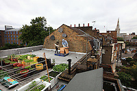 "On the roof of the tavern The 3 Stags in Lambeth, Dr Luke Dixon is practicing his summer activity: urban beekeeping. ""London is the ideal place for honey because of the great variety of flowers and parks and its mild climate."" He told the BBC, ""There are hives at Lambeth Palace in Regents Park, and even the queen has had hives at Buckingham Palace"". Dr Luke Dixon is an expert in urban beekeeping. ""Apiculture in the city is not new. People have been keeping hives on London's rooftops for decades. Robin Leigh-Pemberton, a governor of the Bank of England, has kept hives on the roof of the bank on Threadneedle Street and others have discreetly done the same thing on buildings and offices out of the public gaze."""