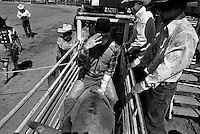 A cowboy waits for the gate to open during the bullriding competition at the annual Lincoln Rodeo in Lincoln, MT in June 2006.  The Lincoln Rodeo is an open rodeo, which means competitors need not be a member of a professional rodeo association.