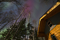 The aurora borealis over a log cabin in the boreal forest of Fairbanks, Alaska.