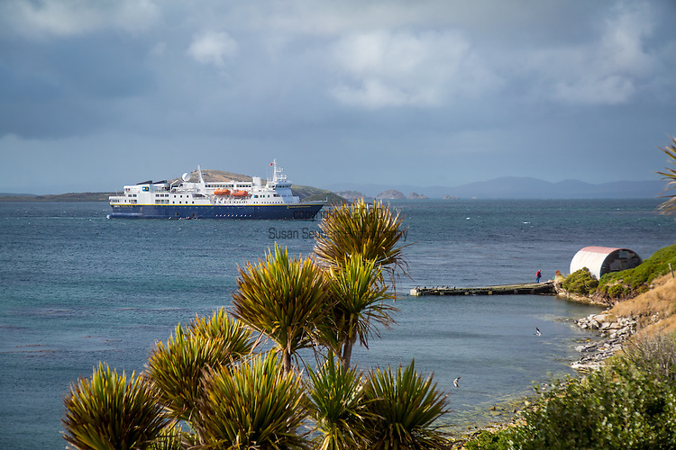 Carcass Island, Falkland Islands, Great Britain