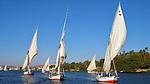 Sailboats on the Nile River, Egypt