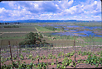 View of vineyards and wetlands from Vianse Vineyards
