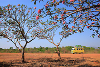 An antediluvian minibus converted into a bush taxi, trees covered in flowers and a dirt road of red laterite make up a typical scene in the tree-filled savanna on the high plateaus of Adamawa.