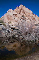 Vertical view of rocks and dead branches reflected in Barker Dam in Joshua Tree National Park.
