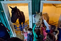 BALTIMORE, MD - MAY 16: Fans on the Breakfast at Old Hilltop tour visit with Big D and Slurpee the police horses on the backsides during preparations for the Preakness at Pimlico Race Course on May 15, 2018 in Baltimore, Maryland (Photo by Scott Serio/Eclipse Sportswire/Getty Images)