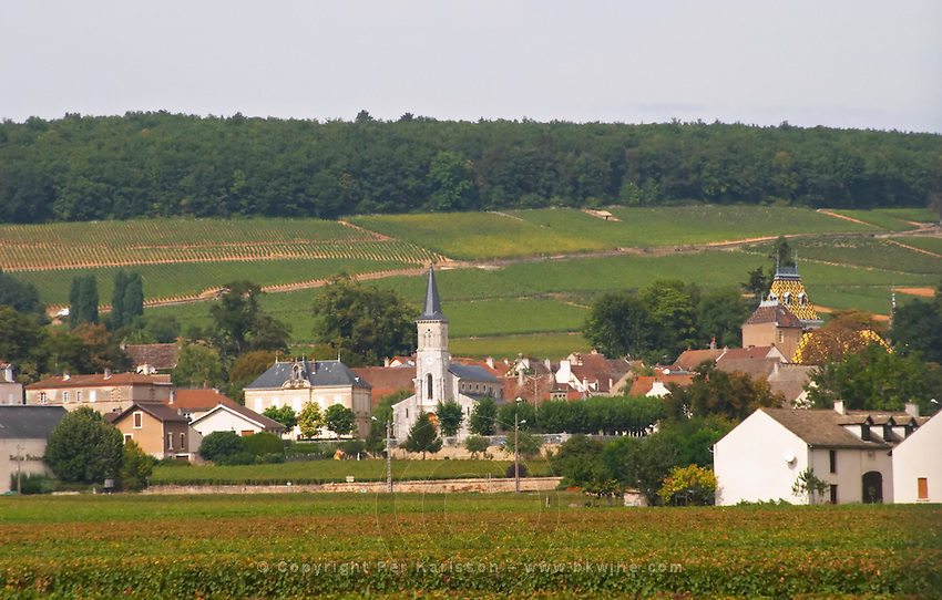 Vineyard. Burgundy, France