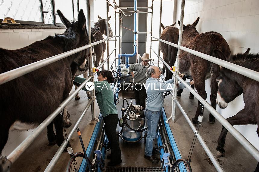 L'allevamento Asilat per la produzione di latte ad uso pediatrico.