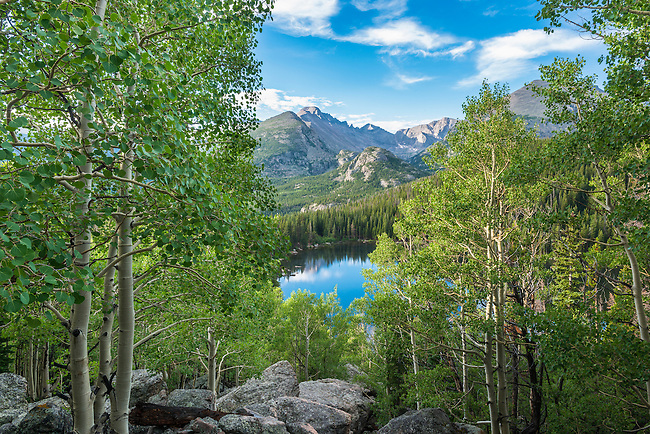 morning among aspen above Bear Lake in Rocky Mountain National Park, Colorado, USA
