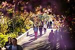 1704-06 GCS Spring 0030<br /> <br /> 1704-06 GCS Spring<br /> <br /> April 5, 2017<br /> <br /> Photography by Nate Edwards/BYU<br /> <br /> &copy; BYU PHOTO 2016<br /> All Rights Reserved<br /> photo@byu.edu  (801)422-7322