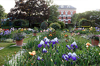 The Jardin des Iris et des Plantes Vivaces (Iris and Perrenials garden), created in 1964 and located in the Jardin des Plantes, Paris, 5th arrondissement, France. In the background, the Galerie d'Anatomie Comparee et de Paleontologie built by Ferdinand Dutert between 1892 and 1898 can be seen. Founded in 1626 by Guy de La Brosse, Louis XIII's physician, the Jardin des Plantes, originally known as the Jardin du Roi, opened to the public in 1640. It became the Museum National d'Histoire Naturelle in 1793 during the French Revolution. Picture by Manuel Cohen
