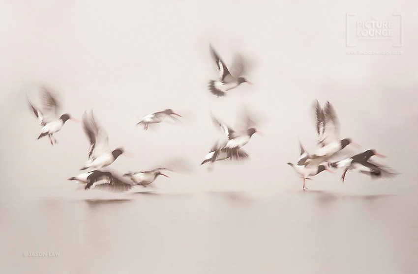 Another award-winning image by Queenstown based photographer Jason Law, a beautifully subtle piece full of movement as the Oystercatchers take flight from the frozen surface of Butchers Dam.