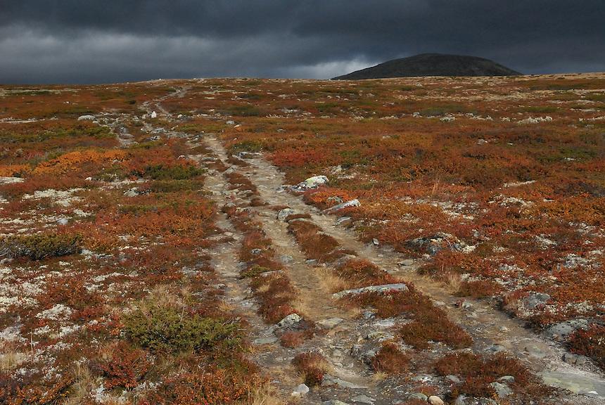 Mountain path,Dovre national park,Norway Landscape, landskap,