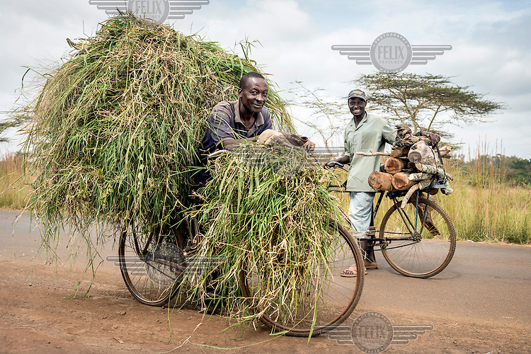 Laban Njoroge, 42 years old, has 3 children and is a small scale farmer. He transports grass for his three cows. He pays 100 Ksh (GBP 0.89) for the grass which he must cut himself. He also collects water for his animals which live in a stable beside his house as he doesn't have th eland to raise them on himself.