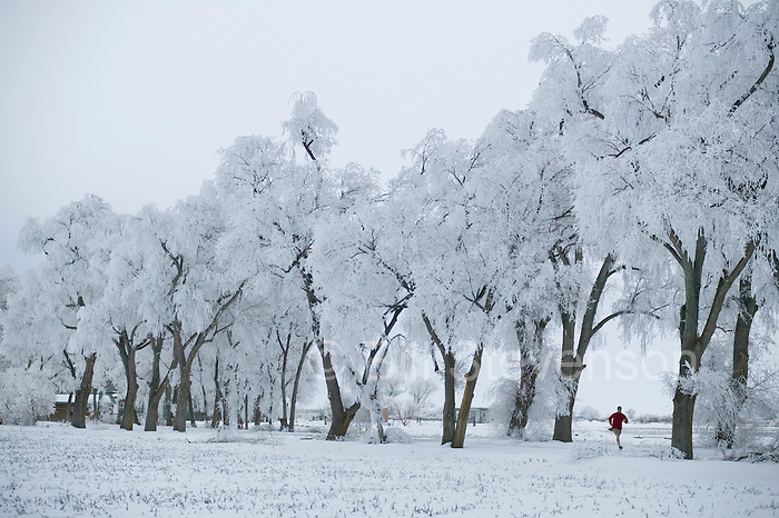 A photo of a man running past frosty trees in Lovelock, NV.