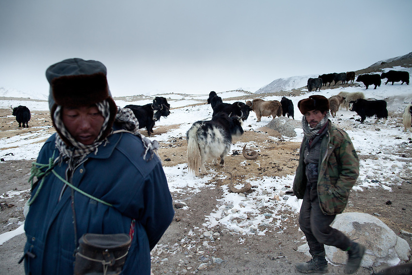Kyrgyz (L) and Wakhi (R). Rounding up yaks at night..At Burgut Yor (Eagle's Nest) camp (Apendi Boi's camp)...Trekking through the high altitude plateau of the Little Pamir mountains, where the Afghan Kyrgyz community live all year, on the borders of China, Tajikistan and Pakistan.