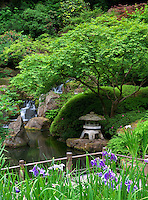 Iris and walkway. Portland Japanese Gardens. Oregon