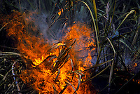 Sugar cane burning at Gay & Robinson Plantation, West Kauai