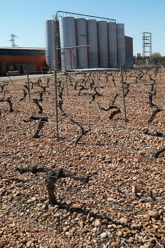 cabernet sauvignon vines outside fermentation and storage tanks bodegas frutos villar , cigales spain castile and leon