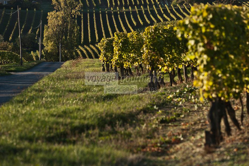 Europe/France/Aquitaine/24/Dordogne/Monbazillac:  Vignoble  AOP Monbazillac