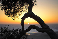 Sunset through tree branches. Santa Monica, California