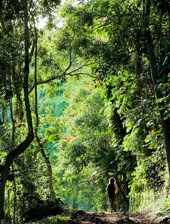 A woman hiking through the forest near Kilauea, Kauai