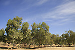 Israel, Northern Negev. Park Ofakim in Besor region